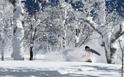 Moiwa Lodge - Niseko powder